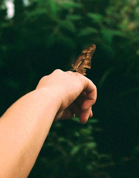 https://briannakalajian.com/files/gimgs/th-20_20_butterfly-crop-.jpg